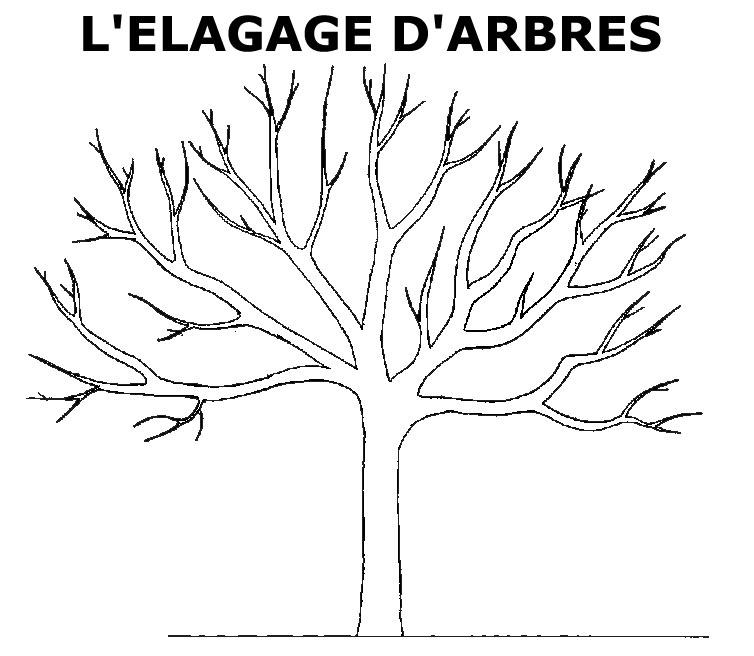 Elagage d 39 arbres en corse for Prix de l elagage d un arbre